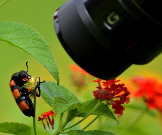 نکاتی درباره ی عکاسی ماکرو