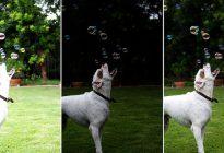بهبود روند عکاسی با یادگیری نوردهی